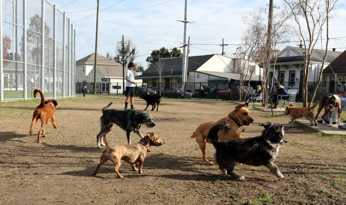 A group of dogs tussle at the Wisner Dog Run while their owners watch on Sunday, Jan. 5, 2013. (Robert Morris, UptownMessenger.com)