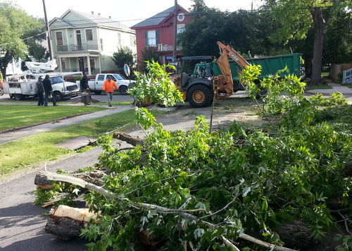 City workers remove pieces Thursday morning of a large tree that fell across Short Street near Sycamore during Wednesday evening's wind storms.