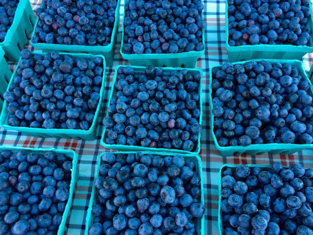 Jerry Burg's Blueberries (Froeba)